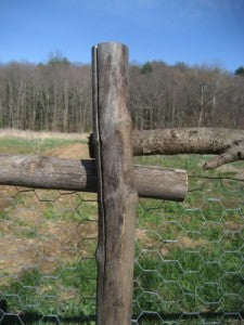 Branch Fence Posts