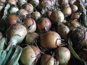 Want tons of onions for next winter? The time to start allium seeds is now.