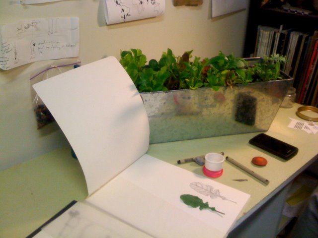 Photo by Gregg Moore of our USB mix growing in a container while another artist illustrates one of the leaves.