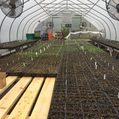 Seedling production at Long Season Farm
