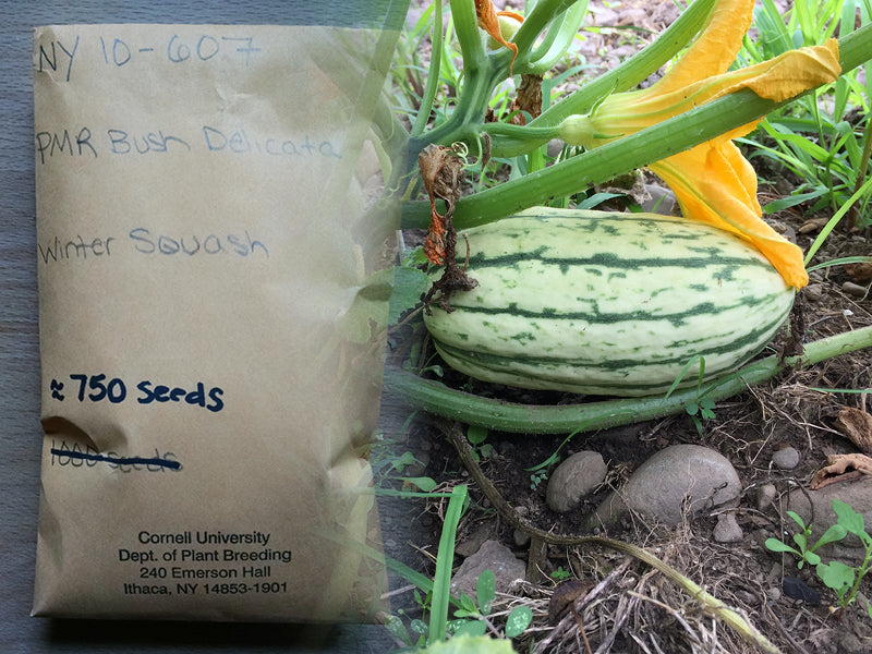 Seeds from Cornell turn into more seeds and food for soup kitchens.