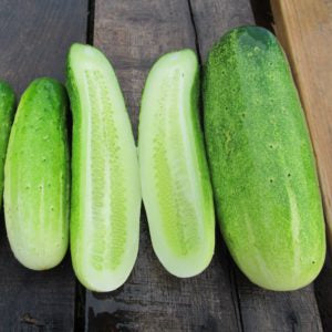 Double Yield Cucumber