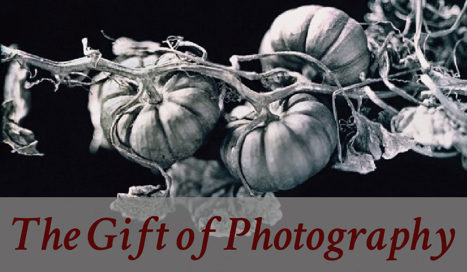 gifts for gardeners photography-01