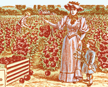 Vintage image from 1914 Fairview Seed Catalog, Syracuse, NY. Digitally altered by Sarah Snow/ Treeodesign.