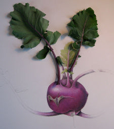 Illustration by Wendy Hollender. Can you tell which part is drawn and which is the actual plant?