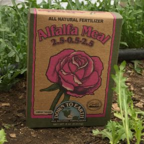 Agnes and Melvin enjoying some superb cat grass