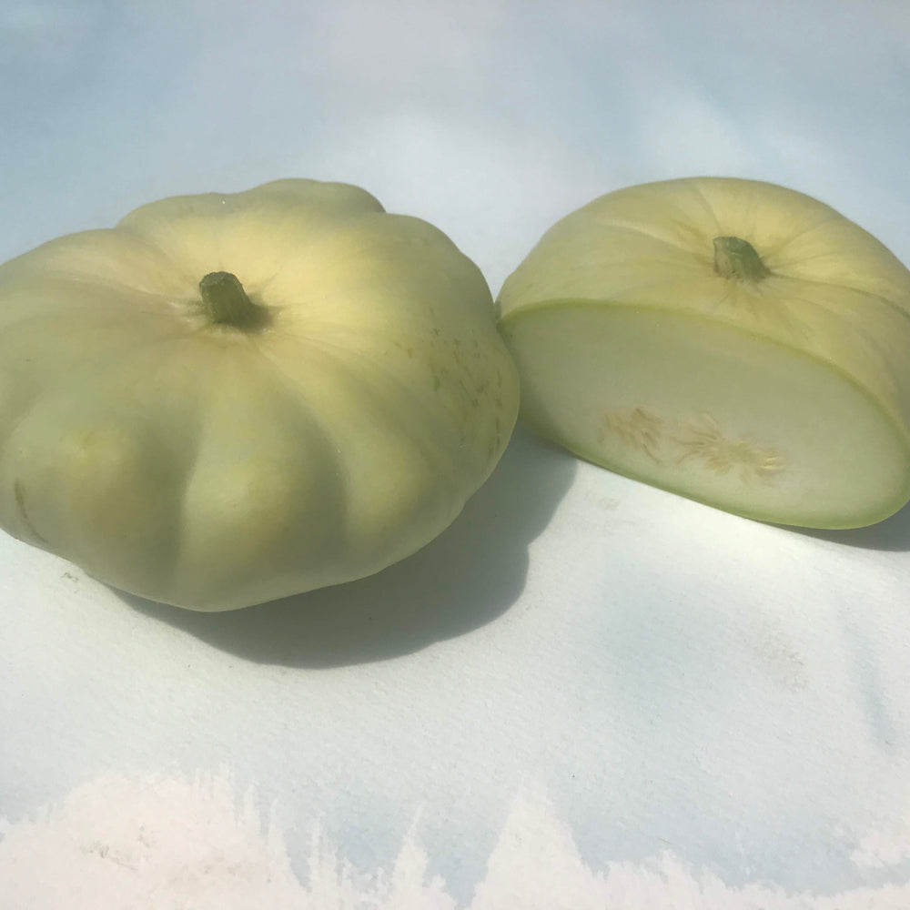 Benning's Green Tint Patty Pan Squash Seedlings