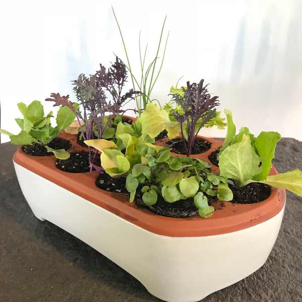 Ceramic Self Watering Seed Starting Tray - Large