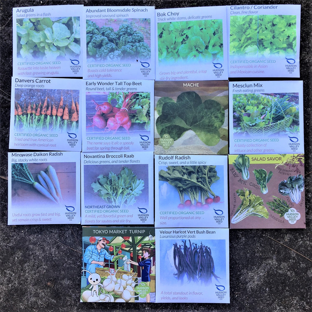 Large Fall Seed Pack Collection (14 varieties)