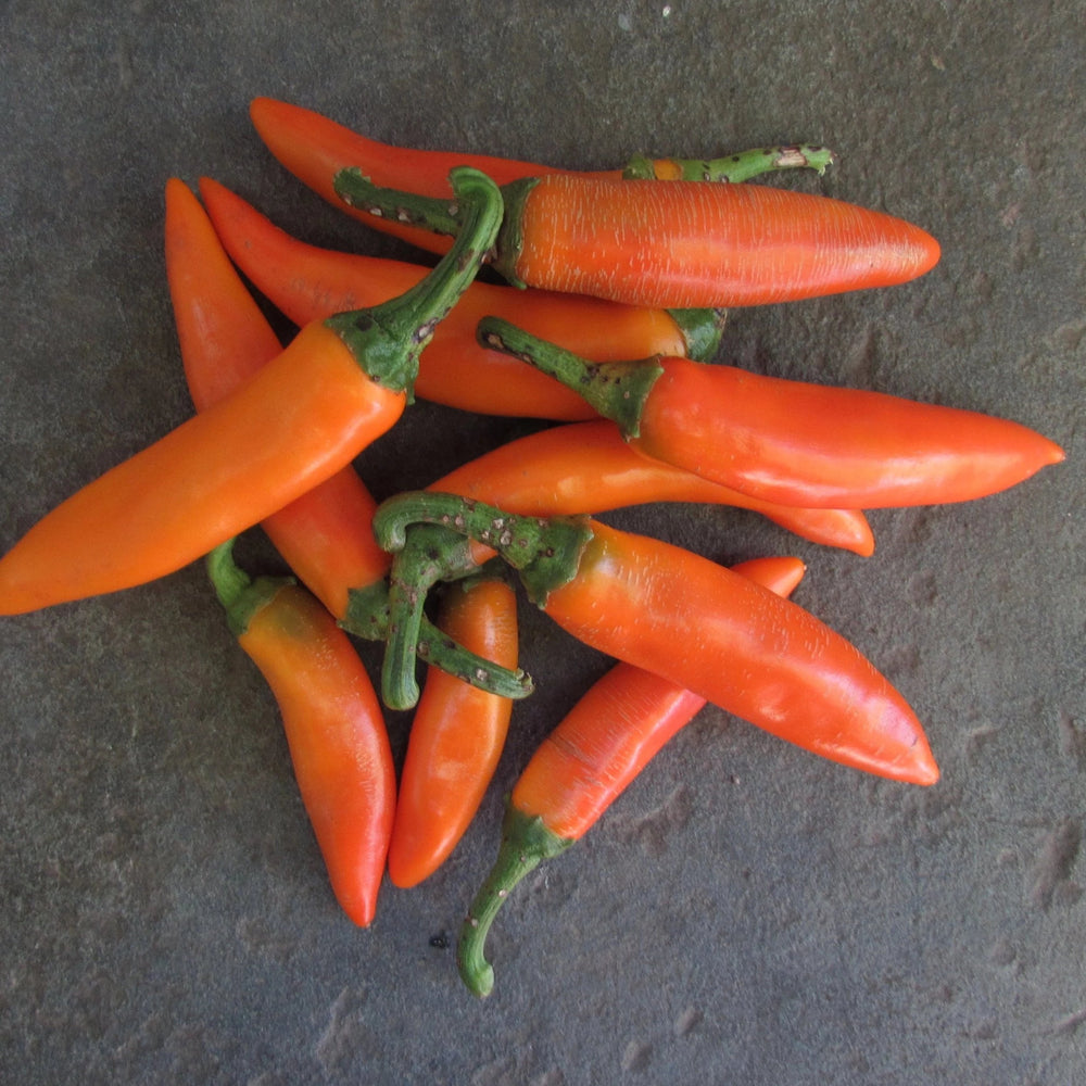 Bulgarian Chile Pepper