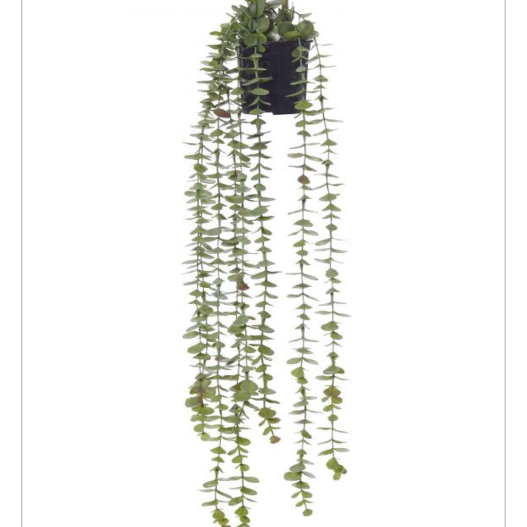 Coin leaf hanging bush-garden