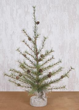 Cypress Pine Tree, 3 ft.
