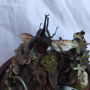 caddisfly creations - beetle