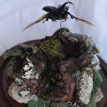 Load image into Gallery viewer, caddisfly creations - beetle