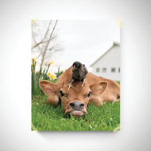 """Calf and Chick"" 8""x10"" Photographic Print"