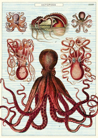 Cavallini & Co Poster Wrap / Octopods