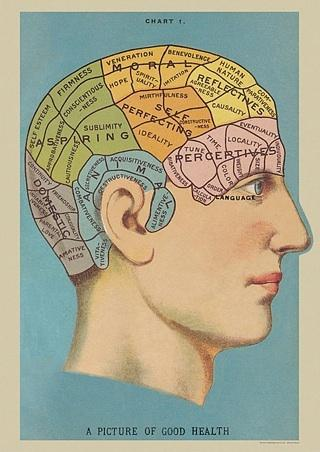 Phrenology Wrap