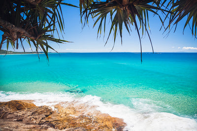a pandanus palm overhanging the calm blue ocean and rocks with Home Beach North Stradbroke Island in the background