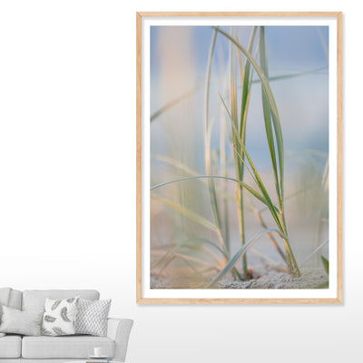 Dune grass on the sand dunes at North Stradbroke Island with the sky in the background wall art in lounge room