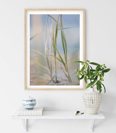 Dune grass framed print on the wall with natural wood frame and close up dune grass image in blues and greens interior wall art design