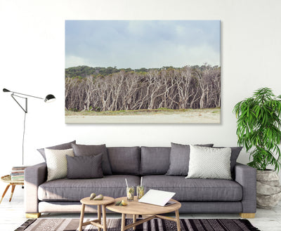 wall art featuring paperbark trees at Home Beach on North Stradbroke Island on the wall in a living room