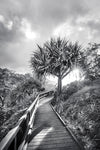 A boardwalk path leads to a pandanus palm tree with the sun peeking through the leaves