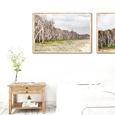 wall art featuring paperbark trees at Home Beach on North Stradbroke Island on the wall in a bedroom