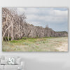 wall art print of a row of paperbark trees alongside the beach at north stradbroke island