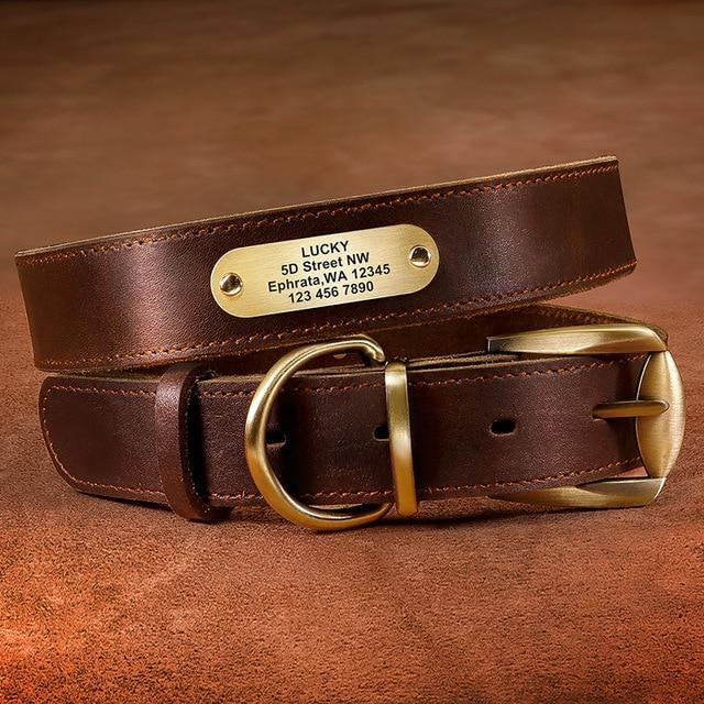 Genuine Leather Dog Collar With Engraved Name Plate - Shop & Dog