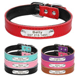 Red, purple, pink and blue leather collars