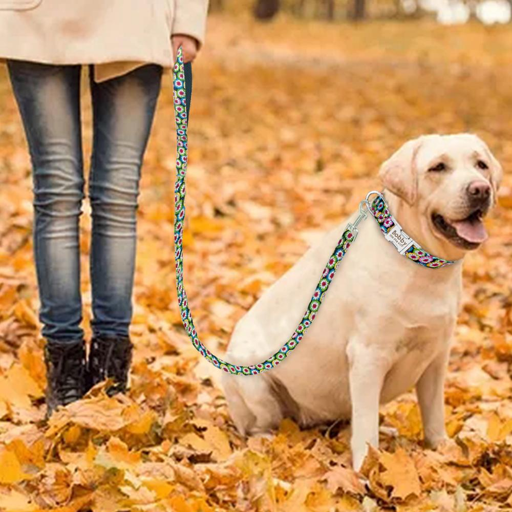 Labrador on daisy leash