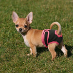 Washable Dog Diaper For Heat Or Incontinence - Shop & Dog