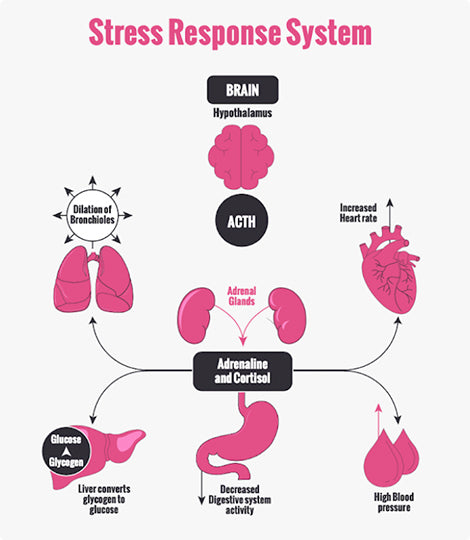 Graphic image of stress response system.