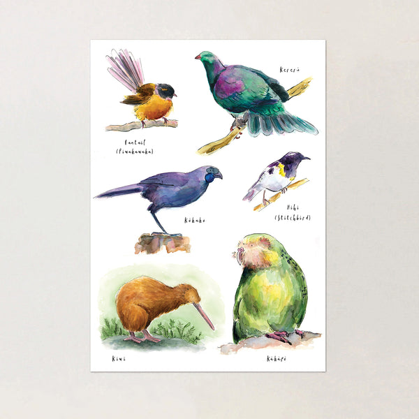 Birds of New Zealand - BUNDLE (both prints) - Raewyn Pope Illustration
