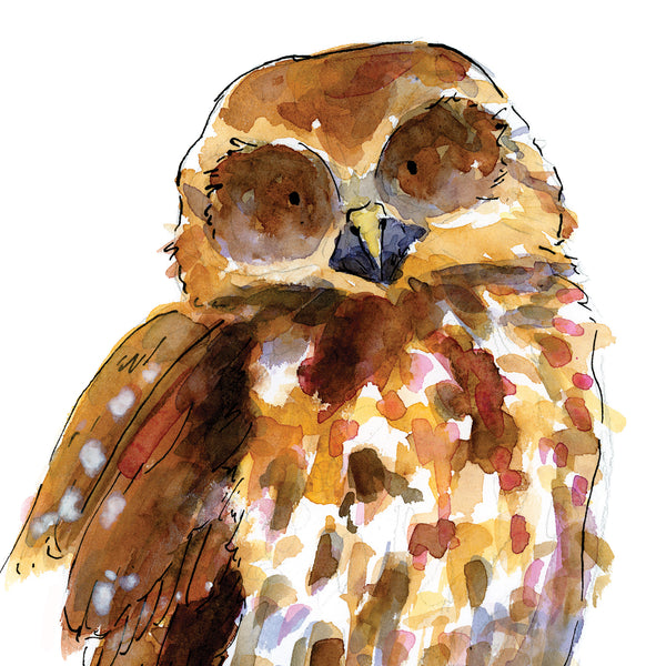 Ruru (Morepork) - Raewyn Pope Illustration