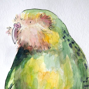 Kākāpō - original painting