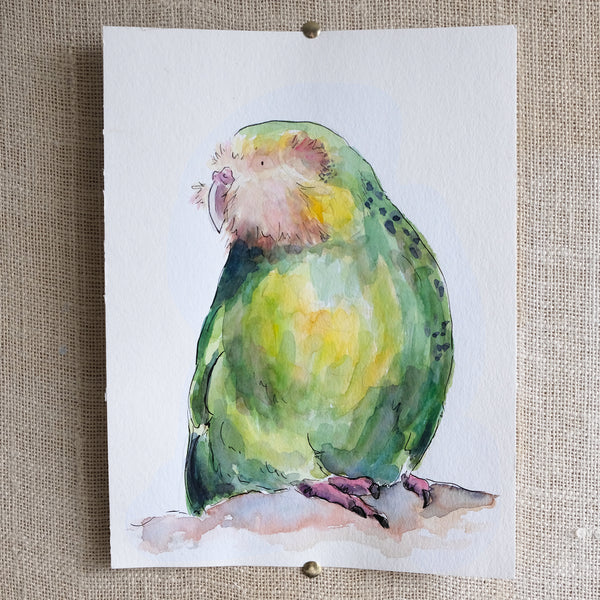 Kākāpō - original painting - Raewyn Pope Illustration