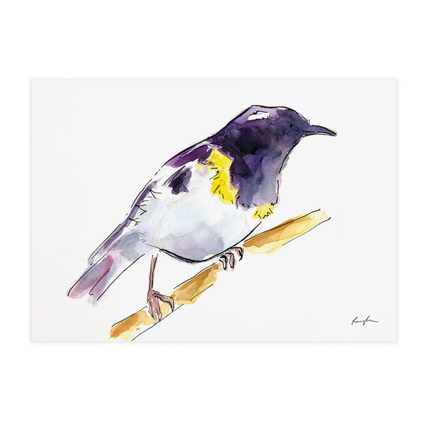 Hihi (Stitchbird) - Raewyn Pope Illustration