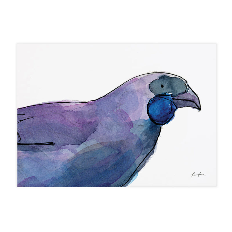 Kōkako - Raewyn Pope Illustration