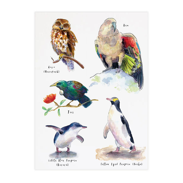 Birds of New Zealand #2 - Raewyn Pope Illustration