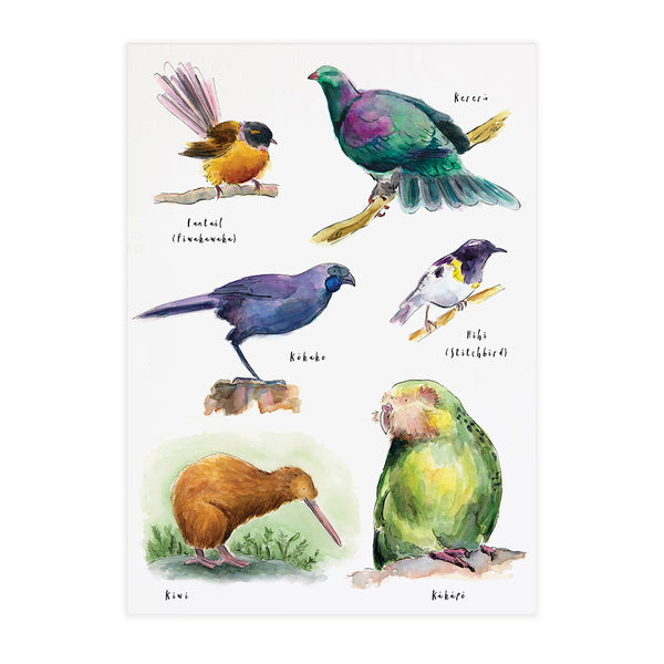 Birds of New Zealand #1 - Raewyn Pope Illustration