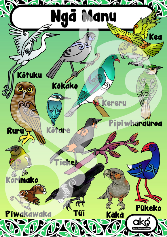 Ngā Manu - NZ Birds A3 Learning Poster