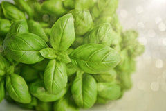 Growing Basil in a Hydroponic System