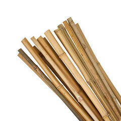 Grow Tools Bamboo Canes 4ft