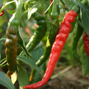 Long Red Cayenne Chilli Seeds