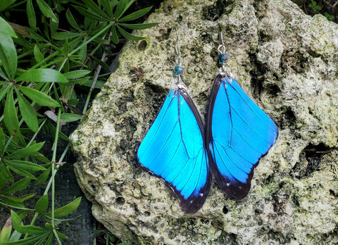 Real Blue Butterfly Wing Earrings