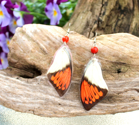 Real Butterfly Wing Earrings of The Great Orange Tip Butterfly