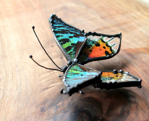 Madascan Sunset Moth Table Top Art, Insect Wing Art, Nature Home Decor