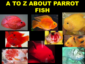 ALL ABOUT PARROT FISH: MAN-MADE FISH
