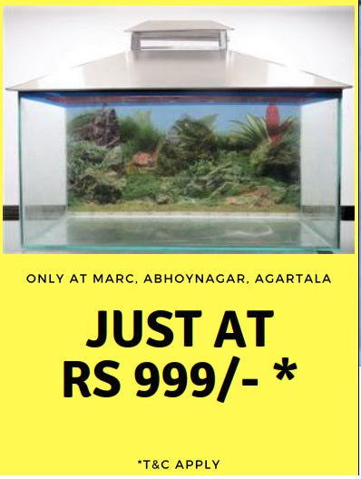 Diwali Dhamaka Offer on Aquarium!! only for TRIPURA